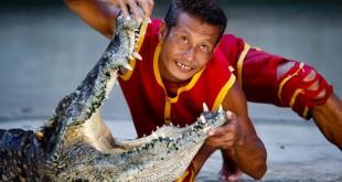 Domador coloca sua cabeça dentro da boca de crocodilo.