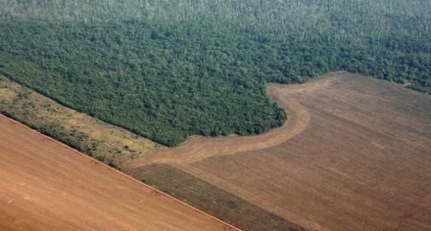 Desmatamento da Amazônia avança 16% em 2015